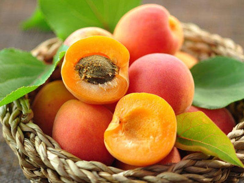 10 удивительных свойств абрикоса